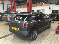 Total Tinting - Citreon Cactus